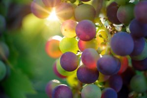 Australian winemakers have been experimenting with Italian grape varieties